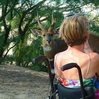 On Safari in South Africa while in a wheelchair