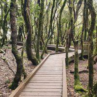 Anaga Biosphere Park Tenerife