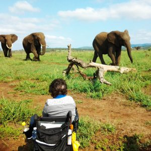 Checking out the elephants on safari