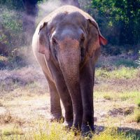 Golden triangle india elephant