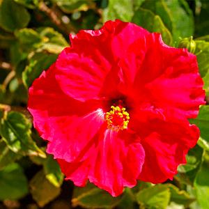 Marbella Flower