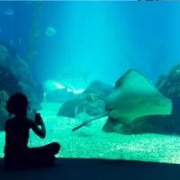 Oceanarium Lisboa