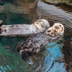 Otters Oceanarium Lisboa