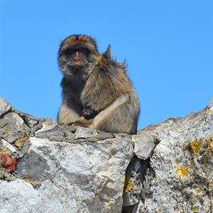 Gibraltar, monkey rock