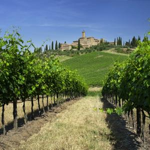 Vineyards Italy Surroundings