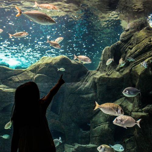 accessible CretAquarium and koules fortress - fish