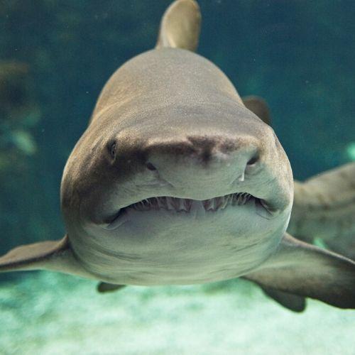 accessible CretAquarium and koules fortress - shark